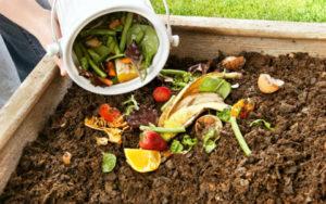 Высыпьте пищевые отходы в компостную кучу или компостер