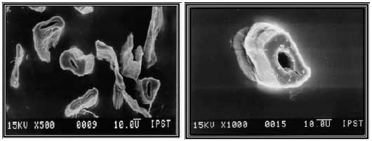 Микрофотографии поперечных срезов волокон бумаги