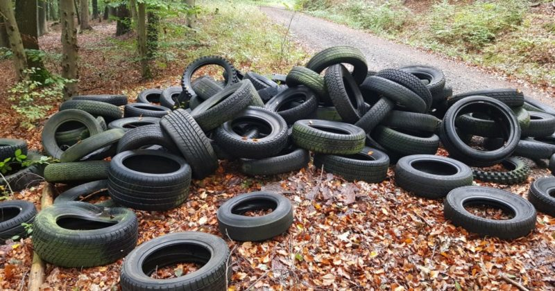 Старые шины на опушке леса