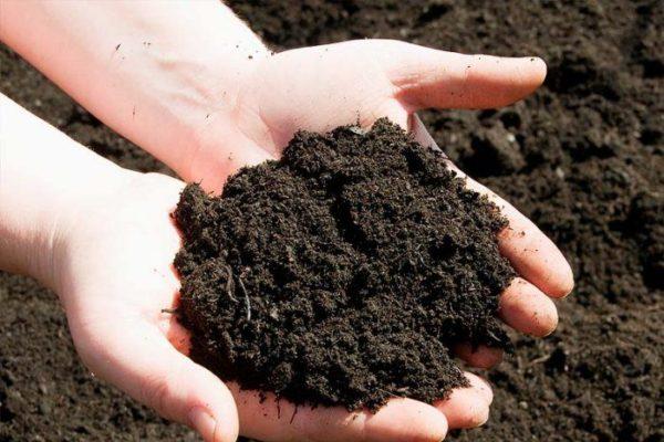 Органическое удобрение из навоза