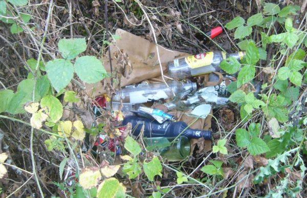 Стеклянные бутылки в лесу