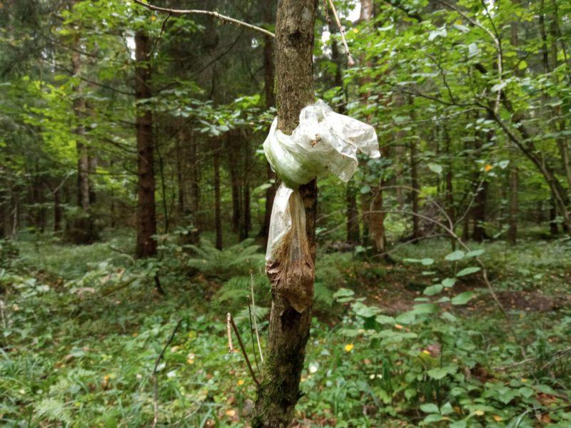 Собачья какашка висит на дереве в пластиковом пакете в лесу
